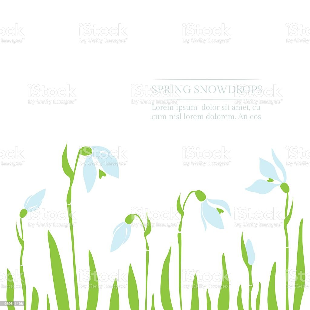 Snowdrops border isolated on white