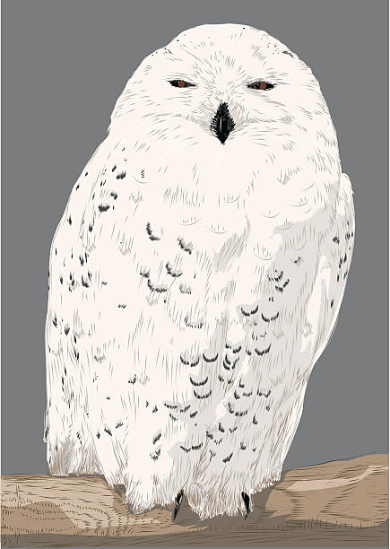 snowy owl - great horned owl stock illustrations, clip art, cartoons, & icons