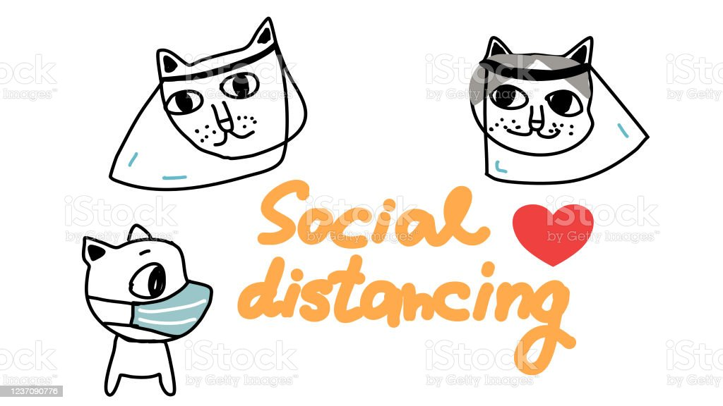 Social Distancing Cat And Dogs Wearing Face Mask And Face Shields