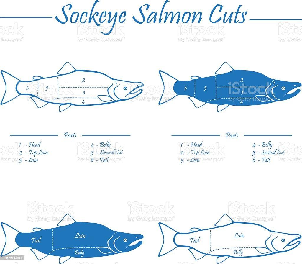Sockeye salmon cuts diagram vector art illustration