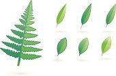 soft leafs XV