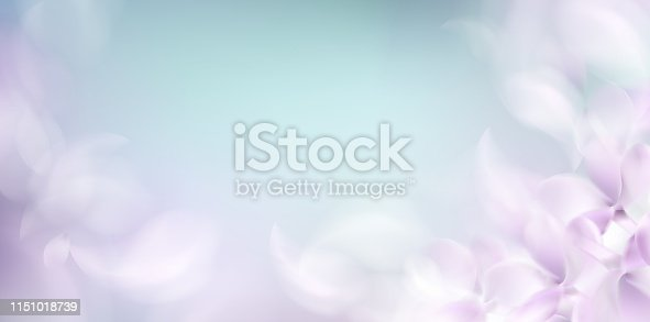 901386728 istock photo Soft spring background with purple blurred flower petals 1151018739