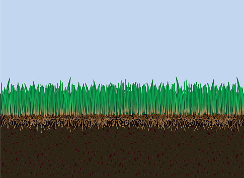 Grass stock illustrations