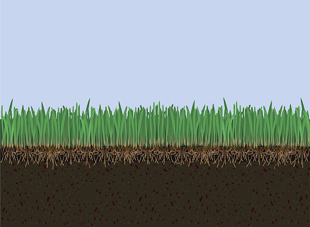 soil and grass - corn field stock illustrations, clip art, cartoons, & icons