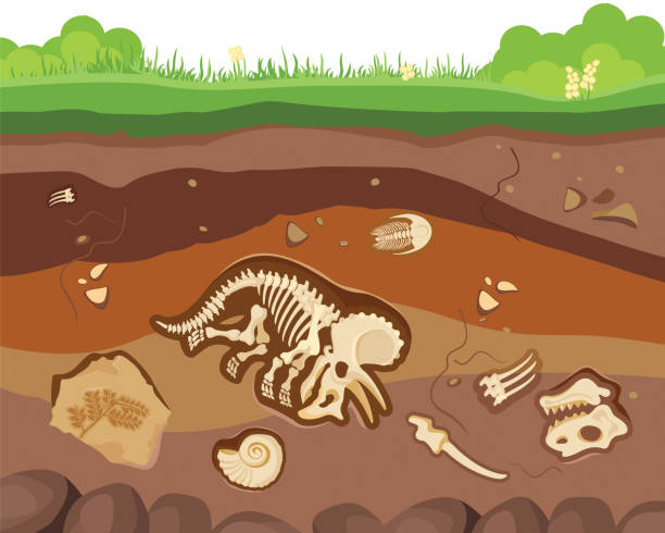 Soil ground layers with buried fossil animals, dinosaur, crustaceans and bones. Vector flat style cartoon illustration vector art illustration