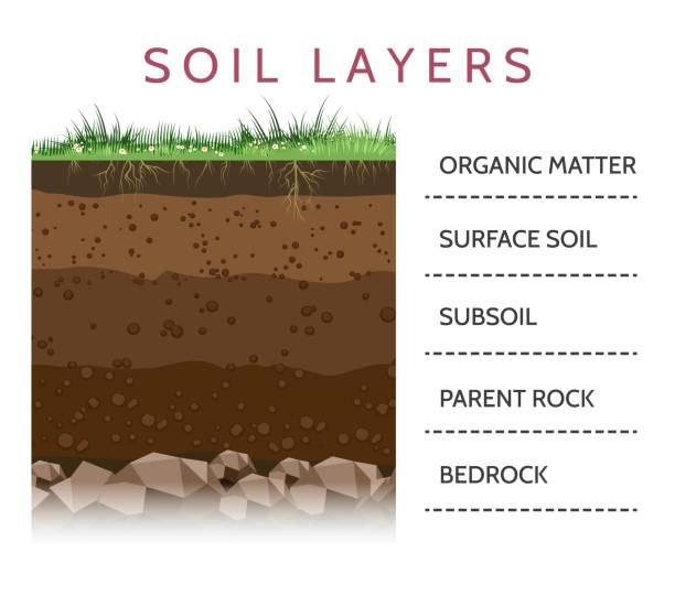 illustrazioni stock, clip art, cartoni animati e icone di tendenza di soil layer scheme with grass - terra
