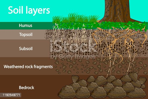 Soil layer scheme with grass and roots, earth texture and stones. Cross section of humus or organic and underground soil layers beneath. Vector illustration