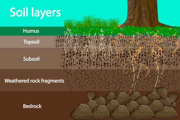 Soil layers. Diagram for layer of soil. Soil layer scheme with grass and roots, earth texture and stones. Cross section of humus or organic and underground soil layers beneath. Vector illustration rock formations stock illustrations