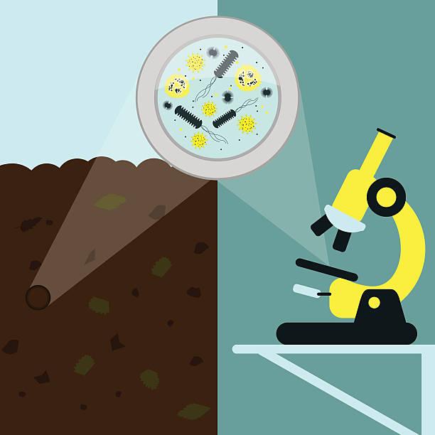 Soil Microbiology vector art illustration