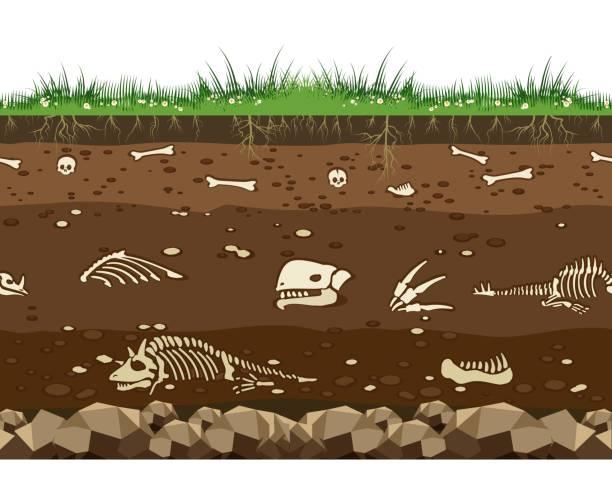ilustraciones, imágenes clip art, dibujos animados e iconos de stock de suelo con los huesos de dinosaurio - dinosaurio