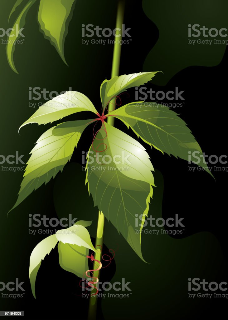 Solar leaf royalty-free solar leaf stock vector art & more images of backgrounds