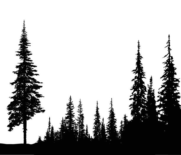 solitary pine - black and white mountain stock illustrations, clip art, cartoons, & icons