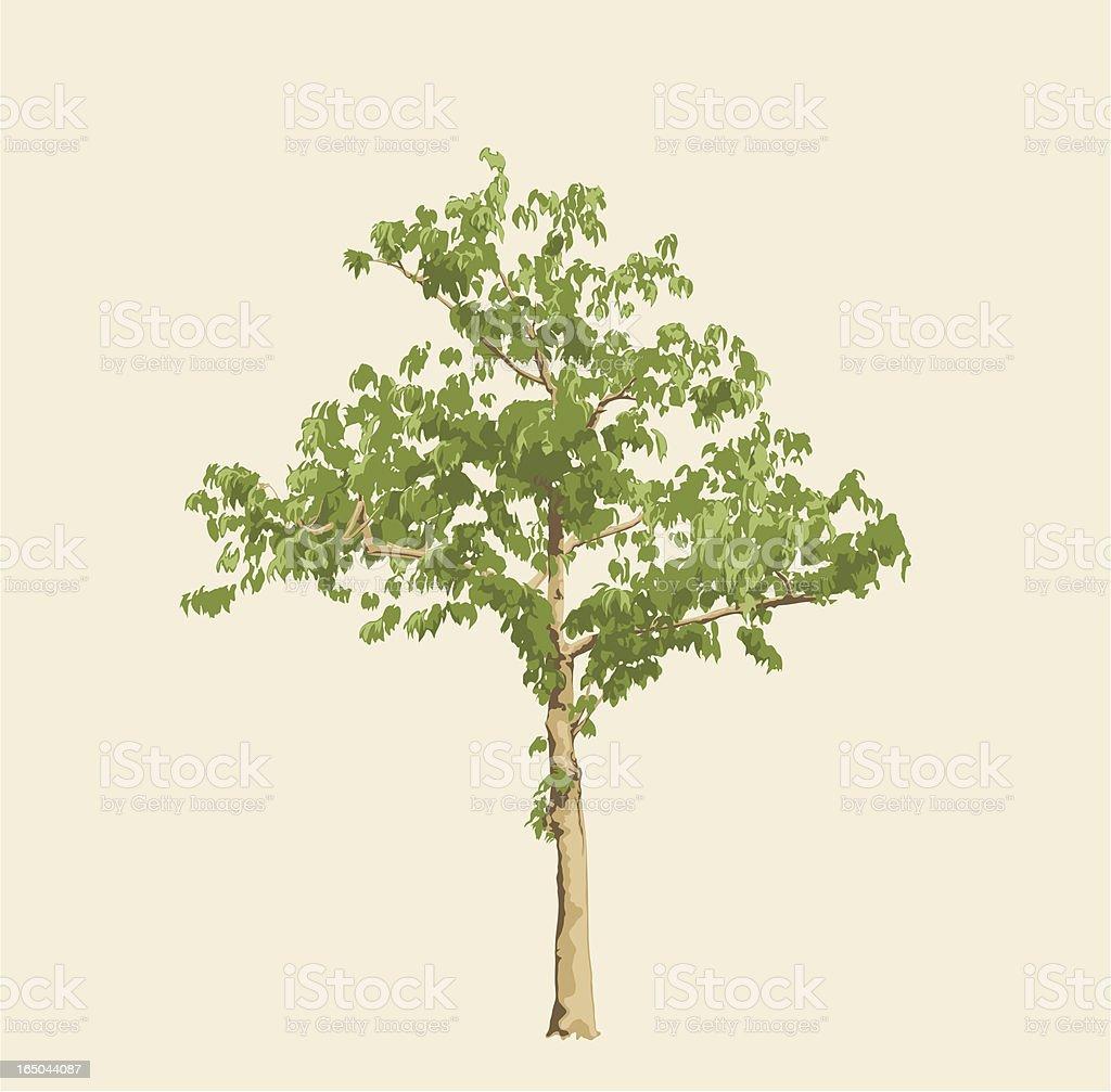 Solo Tree vector art illustration