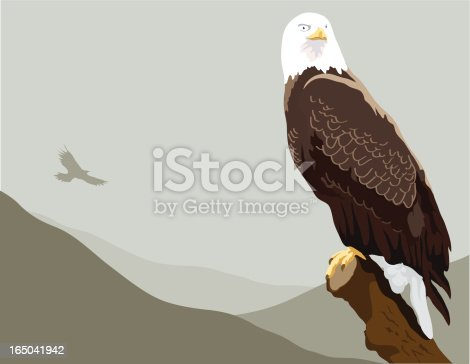 Illustration of a bald eagle overlooking her territory.