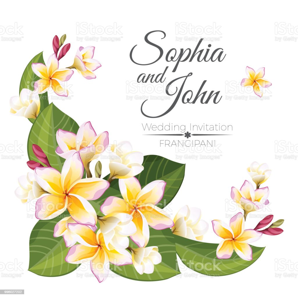 Sophia and John wedding invitation colorful celebration card vector art illustration