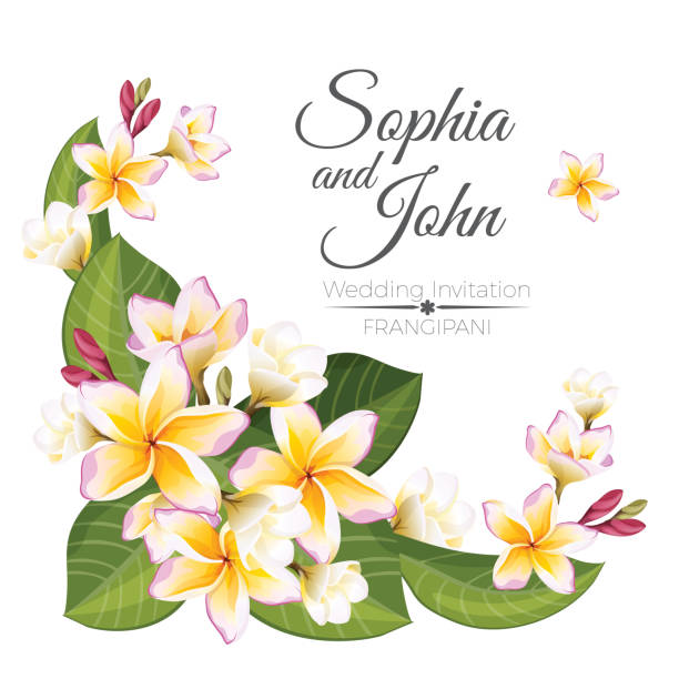Sophia and John wedding invitation colorful celebration card Invitation card on John and Sophia wedding, colorful vector decorative frangipani flowers, blossom plants with open buds, green leaves collection, marriage party frangipani stock illustrations