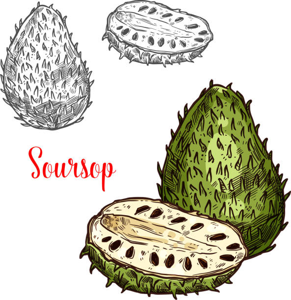 soursop vektor skizze exotische früchte - vanillesauce stock-grafiken, -clipart, -cartoons und -symbole