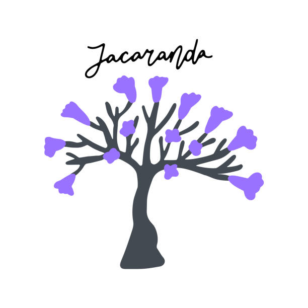 Best Jacaranda Tree Illustrations, Royalty-Free Vector ...
