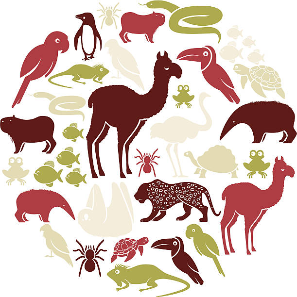 south american tier icon-set - ameisenbär stock-grafiken, -clipart, -cartoons und -symbole