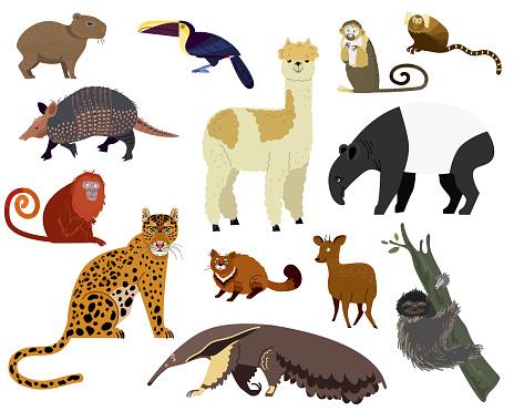 South American animal vector illustration, cartoon armadillo, tapir, capybara, cute alpaca wild or zoo character set isolated on white