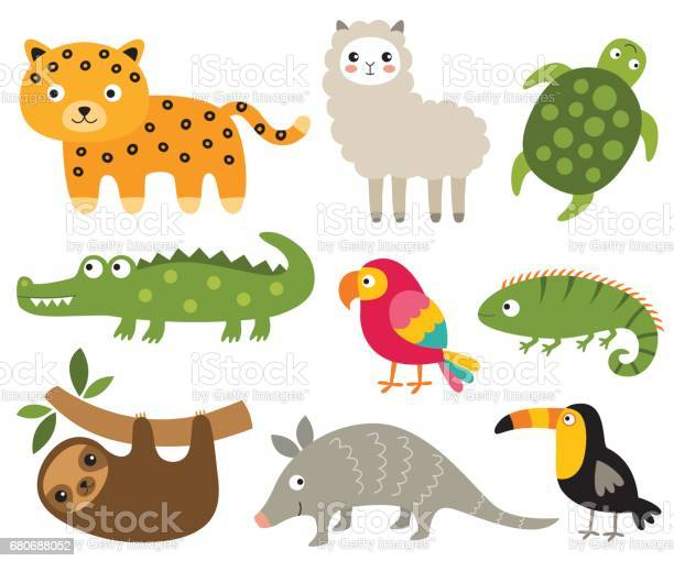 South american animals set vector id680688052?b=1&k=6&m=680688052&s=612x612&h=f6yvwo8rz yzh0b7modylmwbegj38sa7xiz6wdrfbda=