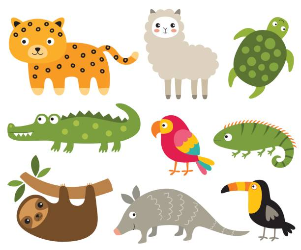 South American animals set South American animals set (jaguar, crocodile, sloth, turtle and other) baby sloth stock illustrations