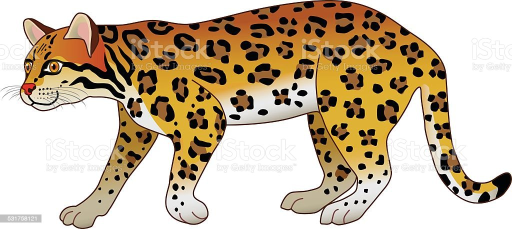 south american tropical rainforest ocelot side view in color royalty free stock vector art