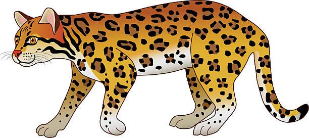 illustrazioni stock, clip art, cartoni animati e icone di tendenza di sud america foresta pluviale tropicale ocelot vista laterale a colori - ocelot