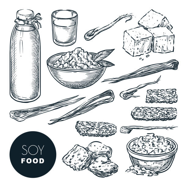 Soy food vegetarian products sketch vector illustration. Soy milk, tofu, sprouts, meat. Hand drawn design elements Soy food vegetarian products sketch vector illustration. Soy milk, tofu, sprouts, meat. Hand drawn isolated design elements. temps stock illustrations