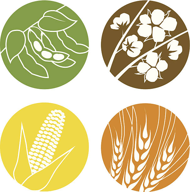 Soybeans, Cotton, Corn and Wheat Icon set of agriculture symbols representing soybeans, cotton, corn and wheat crop plant stock illustrations