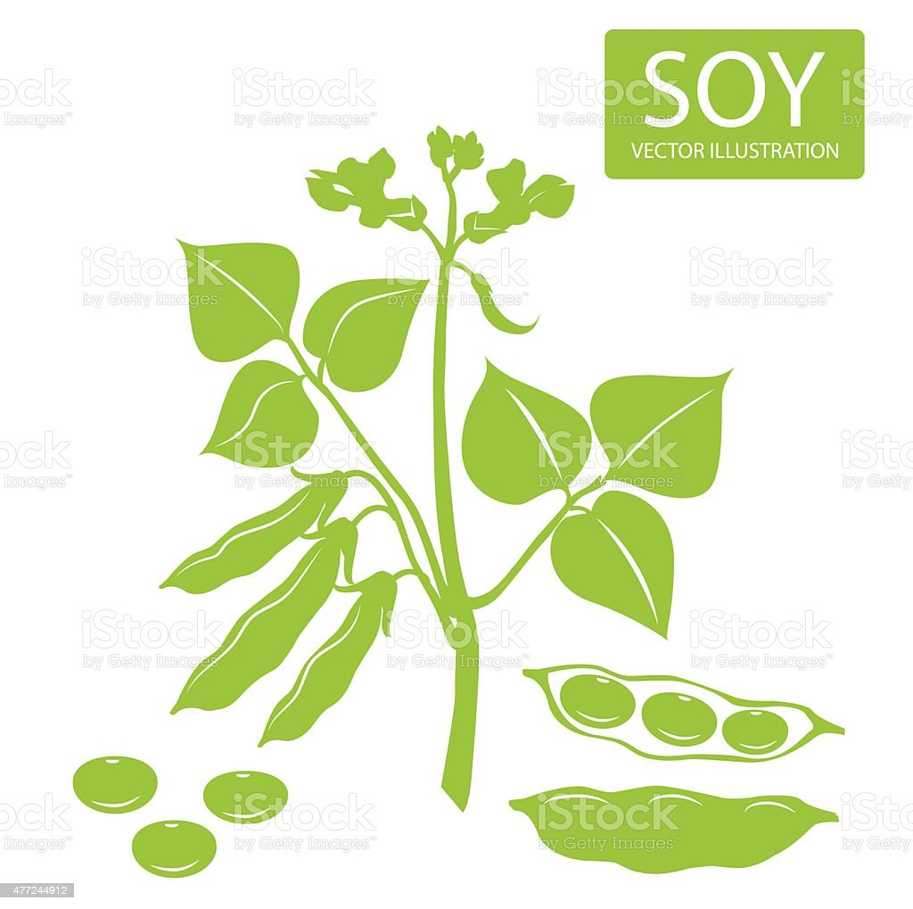 Soybeans silhouette. Vector illustrations set on a white background. vector art illustration