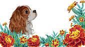 Spaniel dog realistic marigold