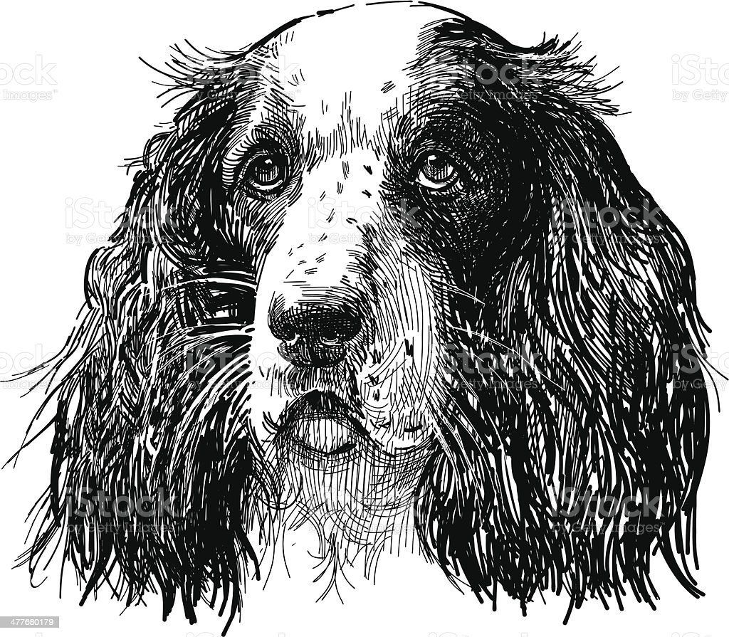 spaniel portrait royalty-free spaniel portrait stock vector art & more images of animal body part