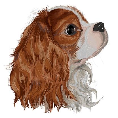 Spaniel Tim dog realistic