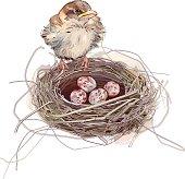 Sparrow and eggs