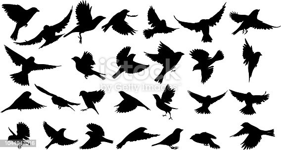 Sparrow Silhouette isolated on white background