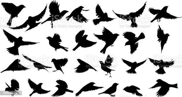 Sparrow silhouette vector id1044947016?b=1&k=6&m=1044947016&s=612x612&h=xxm40k cungzg8tp8ok2yes6q0kaqiuoqhnspclhr4a=
