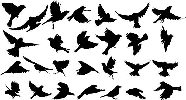 sparrow silhouette - birds stock illustrations