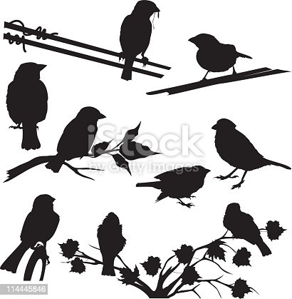 Sparrow silhouette set. Birds can be removed from the branches and wires. Each of the birds are in different poses.  Birds perching on electrical wires, tree branch and plants. Elements can be manipulated.