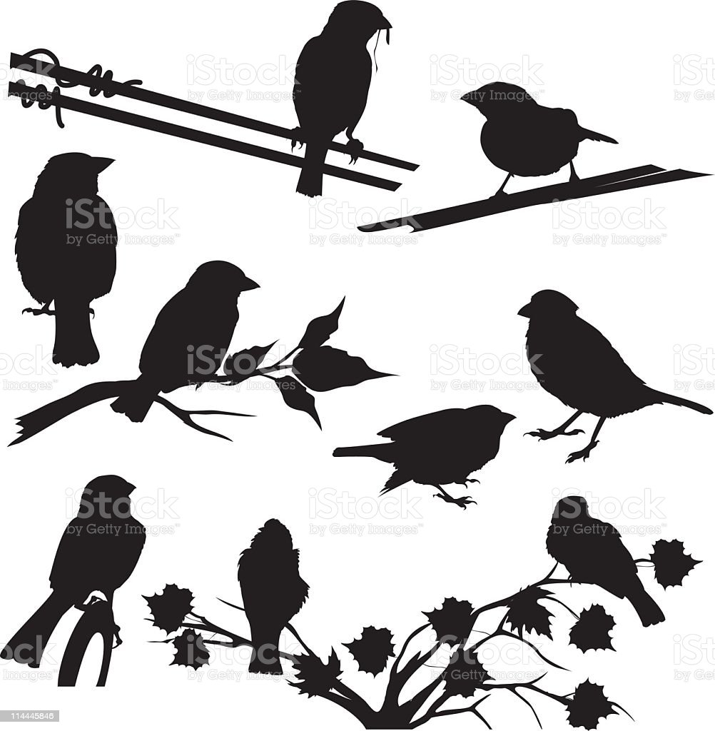 Sparrow Silhouettes Set Different Poses and Perches vector art illustration