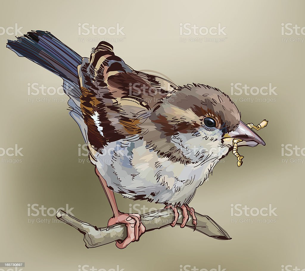 Sparrow royalty-free stock vector art