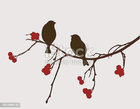 istock sparrows on a mountain ash branch 504898230