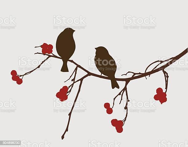 Sparrows on a mountain ash branch vector id504898230?b=1&k=6&m=504898230&s=612x612&h=y6ttfuz0dsbtdvcqsovyc1r3xnun9qaj5zfixrtwavc=
