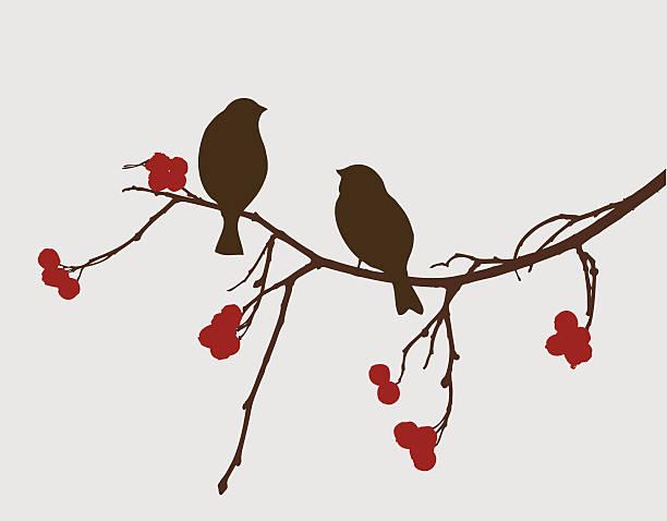 sparrows on a mountain ash branch - birds stock illustrations, clip art, cartoons, & icons