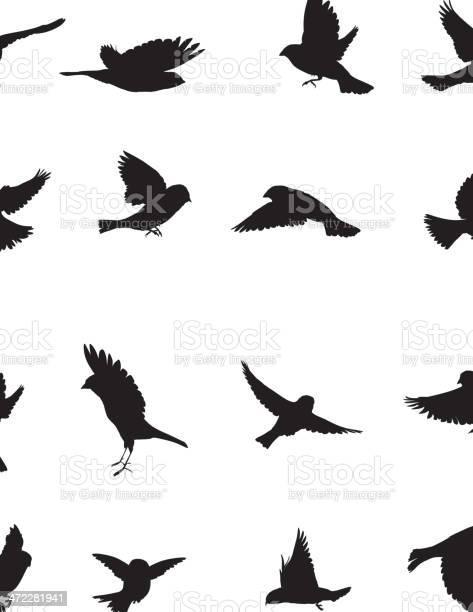 Sparrows silhouette vector id472281941?b=1&k=6&m=472281941&s=612x612&h=cmfjmmbbdb2vnokwekvq12kbd483wr1dijhec0lsg 4=