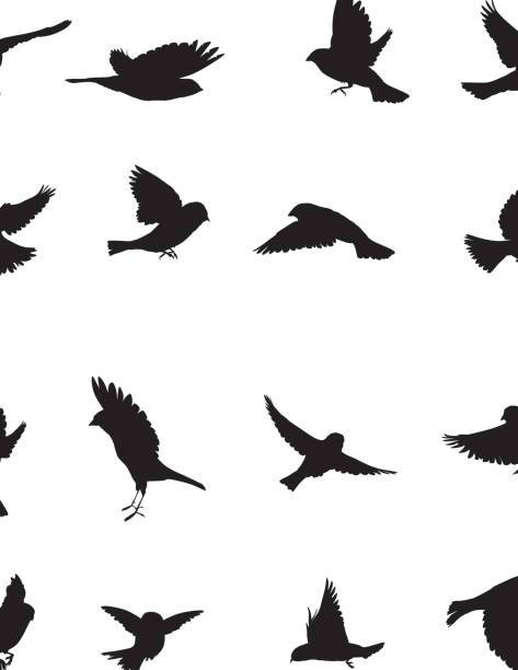 sparrows silhouette - birds stock illustrations