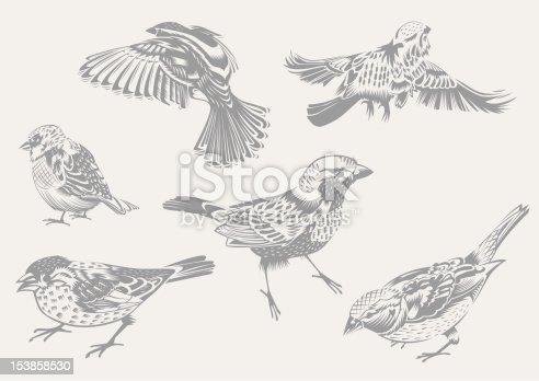 istock Sparrows 153858530