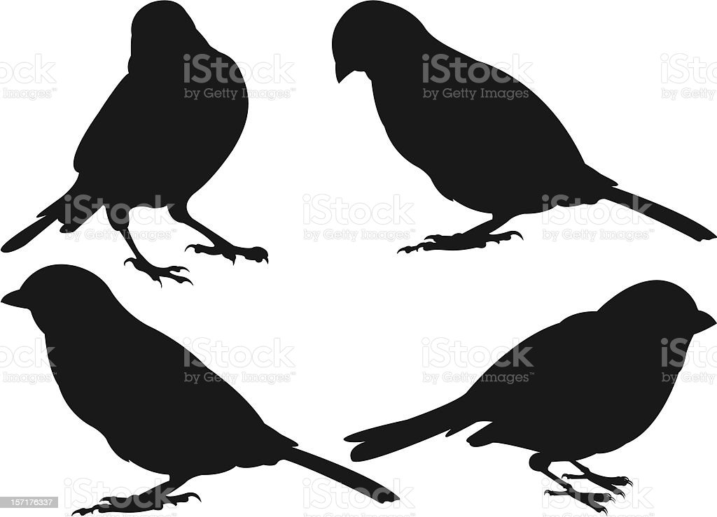 Sparrows vector art illustration