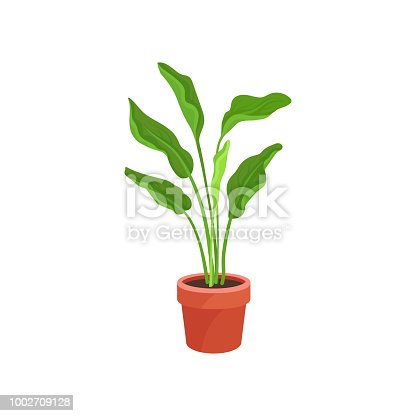 Spathiphyllum or peace lily in brown ceramic pot. Houseplant with long bright green leaves. Natural element of home decoration. Colorful vector illustration in flat style isolated on white background.