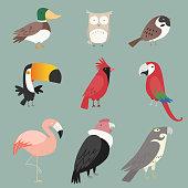 Cartoon species Bird collection. With nine (9) different birds species like: duck, owl, peacock, rooster, pelican, toucan and swan vector illustration birds.